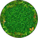 Click here for more Backyard Bugs Carpet by Flagship Carpets by Worthington