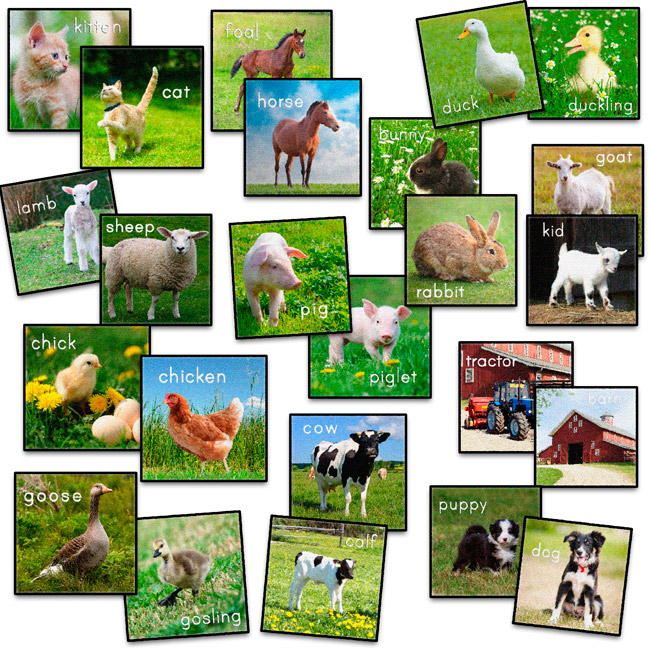 set-of-24-barn-animals-carpet