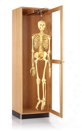 3752422-diversified-woodcrafts-hanging-model-skeleton-cabinet