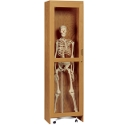Skeleton Science Cabinet by Diversified Woodcrafts